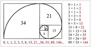 Image result for leonardo fibonacci